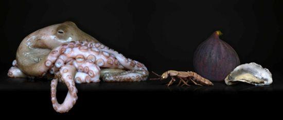Octopus Image Courtesy of Agniet Snoep.