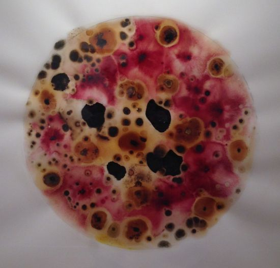 "Arena IV Microbial growth on yupo paper; 20 x 16"" 2014 Photo by Eric Hope for East City Art."