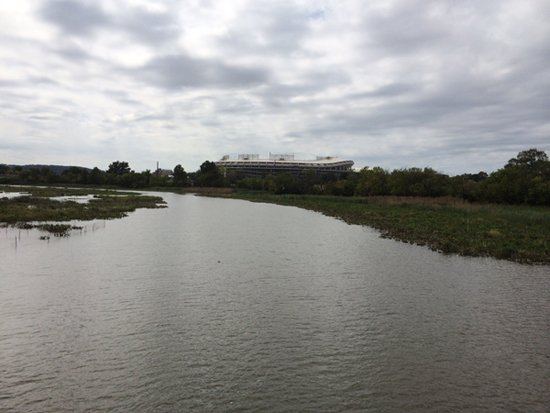 RFK Stadium from Kingman Lake.  Photo by Phil Hutinet for East City Art.
