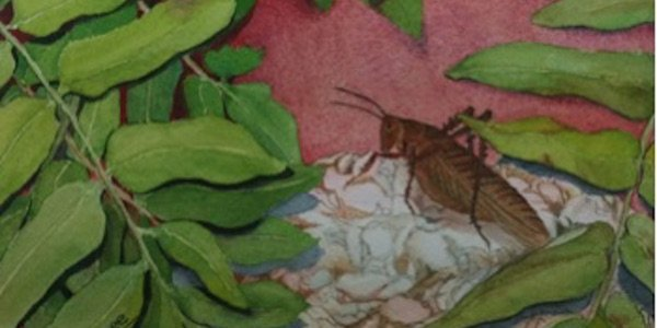 Capitol Hill Art League Juried Show Featuring Critters