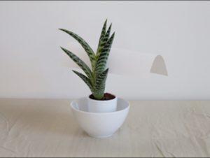 Milana Braslavsky, Green Plant with Paper, 2015, digital pigment print, 20x30 inches. Courtesy of VisArts.