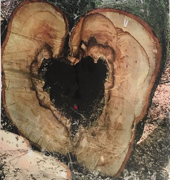 """Heartwood, by Harriet Lesser. Mixed Media on paper. 36""""x24"""". 2017. Courtesy of Studio Gallery."""