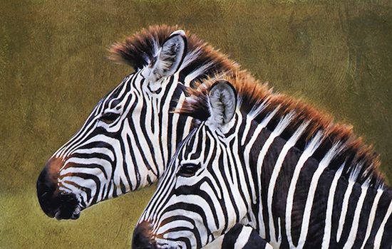 Waverly Street Gallery Presents Carol L. Leadbetter An Impending Silence: Vanishing African Wildlife A Pictorial Tribute to Those Struggling to Survive