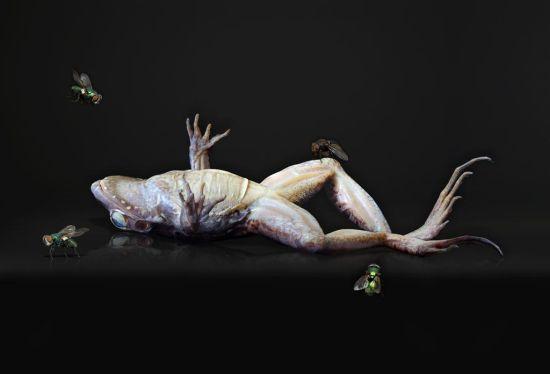 Dead Frog Image Courtesy of Agniet Snoep.