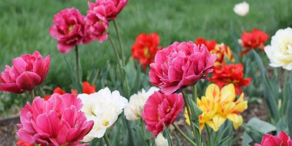Riversdale in Bloom Call for Entries