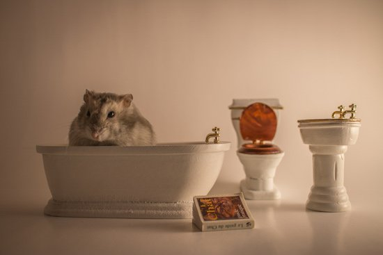 Morning Ritual by Lisa Allen. Courtesy of Touchstone Gallery.