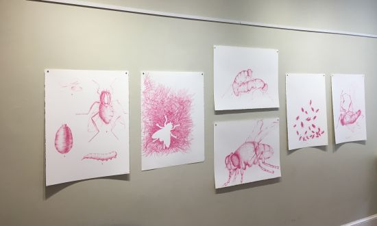 A suite of smaller-scale drawings suggests the life stages of the fly. Photo for East City Art by Eric Hope.