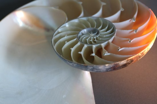 Shell, with Light by Larry O'Reilly. Courtesy of Hill Center Galleries.