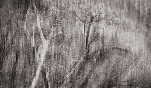 Multiple Exposures Gallery Presents Sarah Hood Salomon The Spirit of the Woodlands