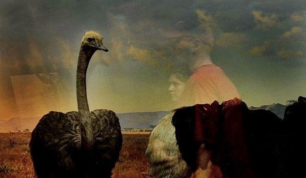 The OAS AMA | Art Museum of the Americas Presents Paula Pedrosa, Traer Scott, and Andrés Wertheim Museum: A Haunted Medium